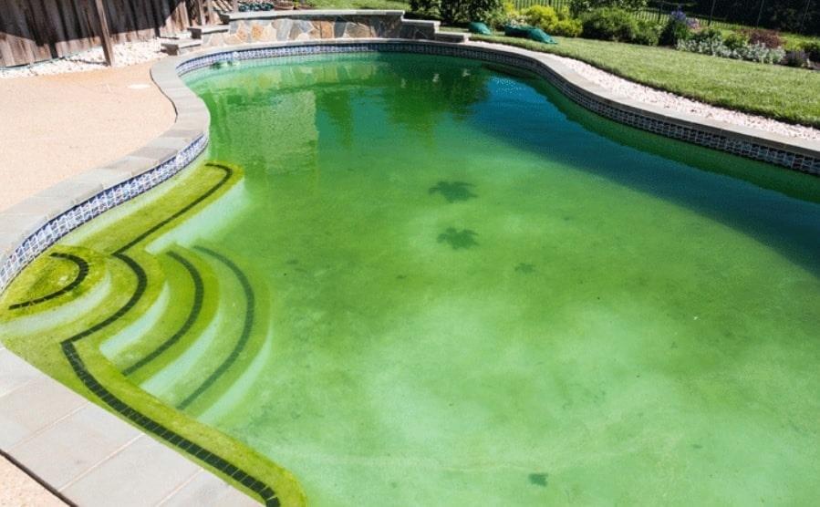 جلوگیری از سبز شدن آب استخر